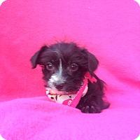 Adopt A Pet :: Karla - Burbank, CA