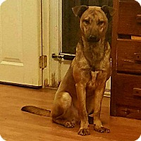 Adopt A Pet :: Banks - Tower City, PA
