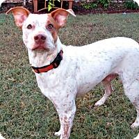 Adopt A Pet :: Hope - McKinney, TX