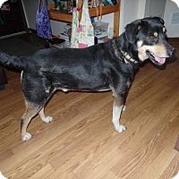 Adopt A Pet :: Henry - Aurora, IL
