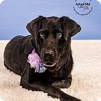 Adopt A Pet :: Spooky $14 - Cincinnati, OH