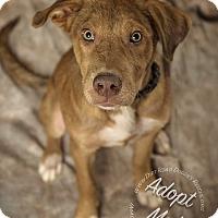 Adopt A Pet :: Barney - Gillsville, GA