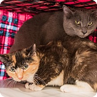 Adopt A Pet :: Cindy and Skippy - Staten Island, NY