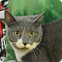 Adopt A Pet :: Joy - Germantown, TN