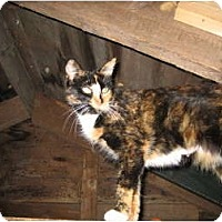 Adopt A Pet :: Tilly - Portland, ME