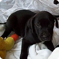 Adopt A Pet :: DEE DEE - Glastonbury, CT