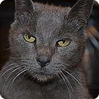 Adopt A Pet :: Jessie - Xenia, OH