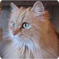 Adopt A Pet :: Valencia - Davis, CA