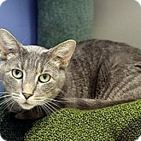 Adopt A Pet :: Kee Mao - Chicago, IL