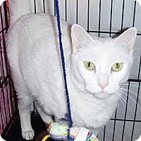 Adopt A Pet :: Precious - Glendale, AZ