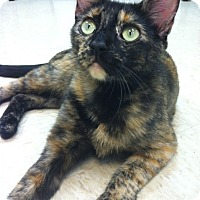 Adopt A Pet :: Patches - Bensalem, PA