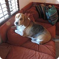 Adopt A Pet :: Jacob - Phoenix, AZ
