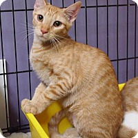 Adopt A Pet :: Chelsea - Ocean City, NJ