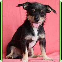 Adopt A Pet :: Wolfie - Edmonton, AB