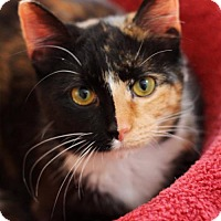 Adopt A Pet :: Molly female $45 - knoxville, TN