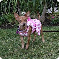 Adopt A Pet :: CALISTA - Newport Beach, CA
