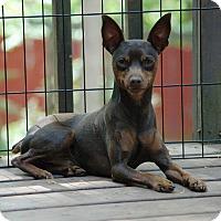Adopt A Pet :: Thor - Lawrenceville, GA
