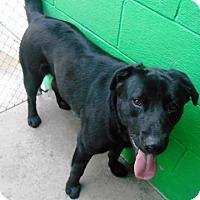 Adopt A Pet :: Sawyer - Redding, CA