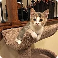 Adopt A Pet :: Mabel - Salt Lake City, UT