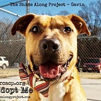 Adopt A Pet :: Gavin - Richmond, VA