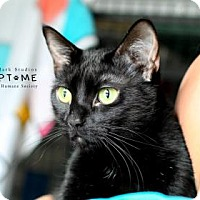 Adopt A Pet :: Roxy - Edwardsville, IL
