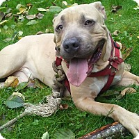 Adopt A Pet :: Duke, coolest, fun-loving dude - Snohomish, WA