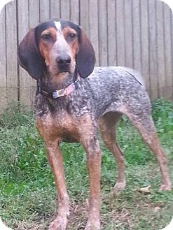 Coonhound/Hound (Unknown Type) Mix Dog for adoption in Ontario, Ontario - Sage - ADOPTED!