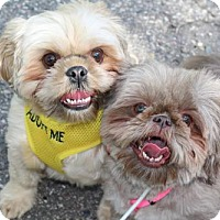 Adopt A Pet :: Charlie (and Coco) - St. Bonifacius, MN