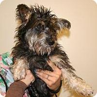 Adopt A Pet :: Sofia - Wildomar, CA