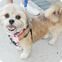 Adopt A Pet :: Gizmo - Umatilla, FL