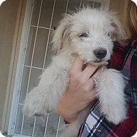 Adopt A Pet :: Frodo - Palmdale, CA