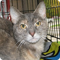 Adopt A Pet :: Margie - New Kensington, PA