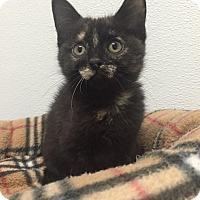 Adopt A Pet :: audrey - Bryan, OH