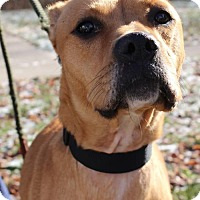 Adopt A Pet :: Lorraine - Hillsdale, IN