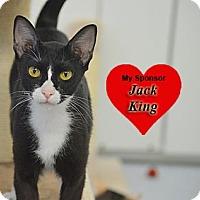 Adopt A Pet :: Selena - San Leon, TX