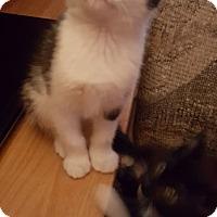 Adopt A Pet :: Doug - Toledo, OH