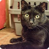 Adopt A Pet :: Bradley - New York, NY