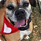 Adopt A Pet :: Loralie