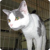 Adopt A Pet :: Giselle - Catasauqua, PA
