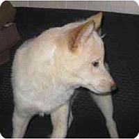 Adopt A Pet :: Nikko - Antioch, IL