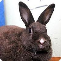 Adopt A Pet :: Michelle - Woburn, MA