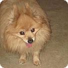 Adopt A Pet :: Hobo