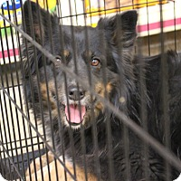 Adopt A Pet :: California Bear - Westley, CA