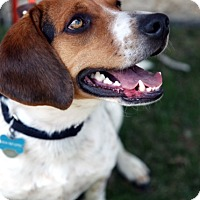 Adopt A Pet :: Harry - Richmond, VA