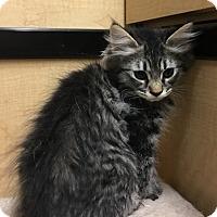 Adopt A Pet :: Pecan - Riverside, CA