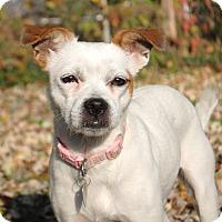 Adopt A Pet :: Daphne - ADOPTION PENDING - Howell, MI