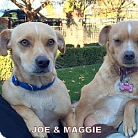 Adopt A Pet :: Maggie and Joe - Lindsay, CA