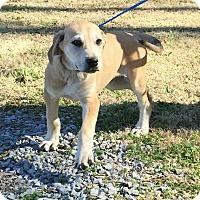 Adopt A Pet :: Stormy (Pom-DC) - Allentown, PA
