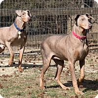 Adopt A Pet :: GALON - Greensboro, NC