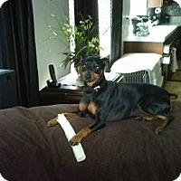 Adopt A Pet :: Lil bit - Nuevo, CA